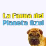 la-fauna-del-planeta-azul